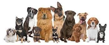 """vous livrer mon e-book """"Les bases pour dresser votre chien"""""""