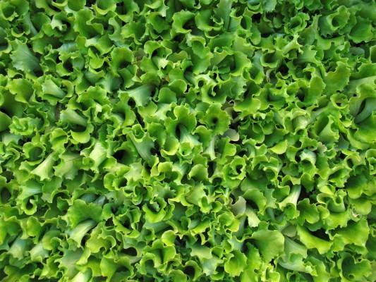 remettre tes plantes en bon état