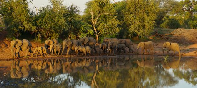 vous envoyer 5 magnifiques photos d'Afrique du Sud